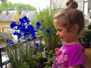 Watering her blue flowers with Mommy earlier today